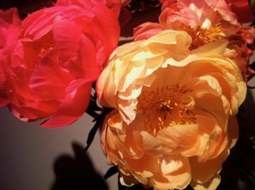 Peonies www.onlineflowergarden.com