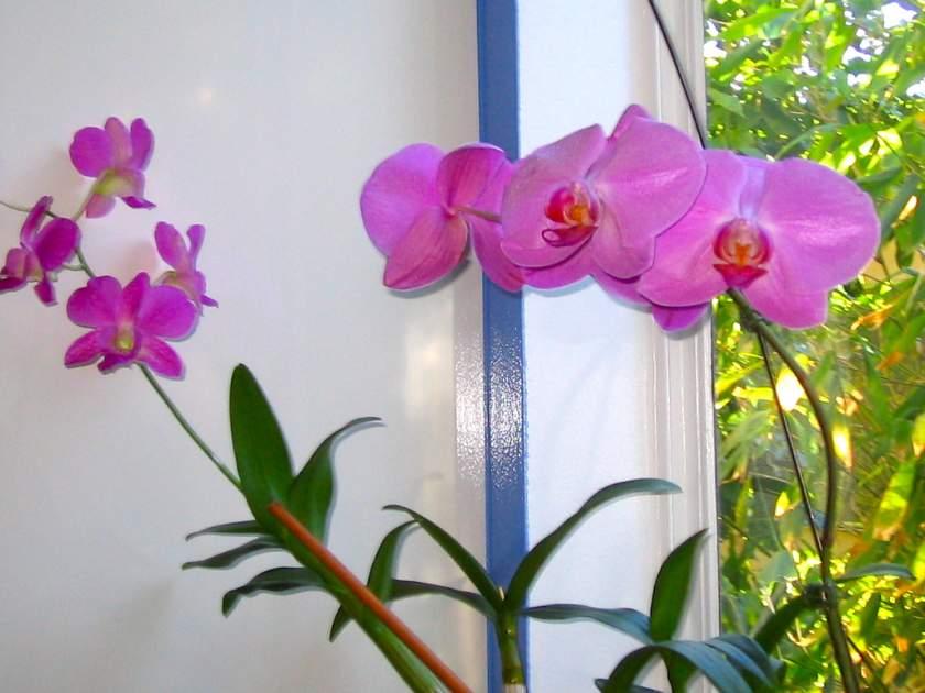 Orchid online-flower-garden.com