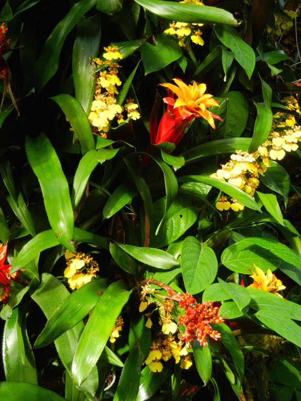 Bromeliads at Kew Gardens
